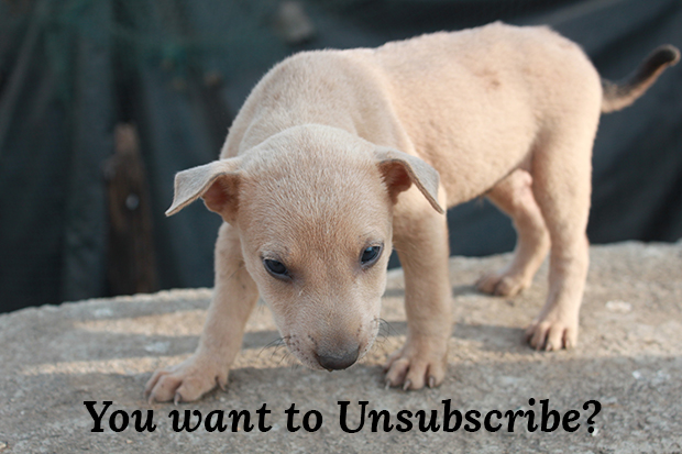 Unsubscribe_Puppy